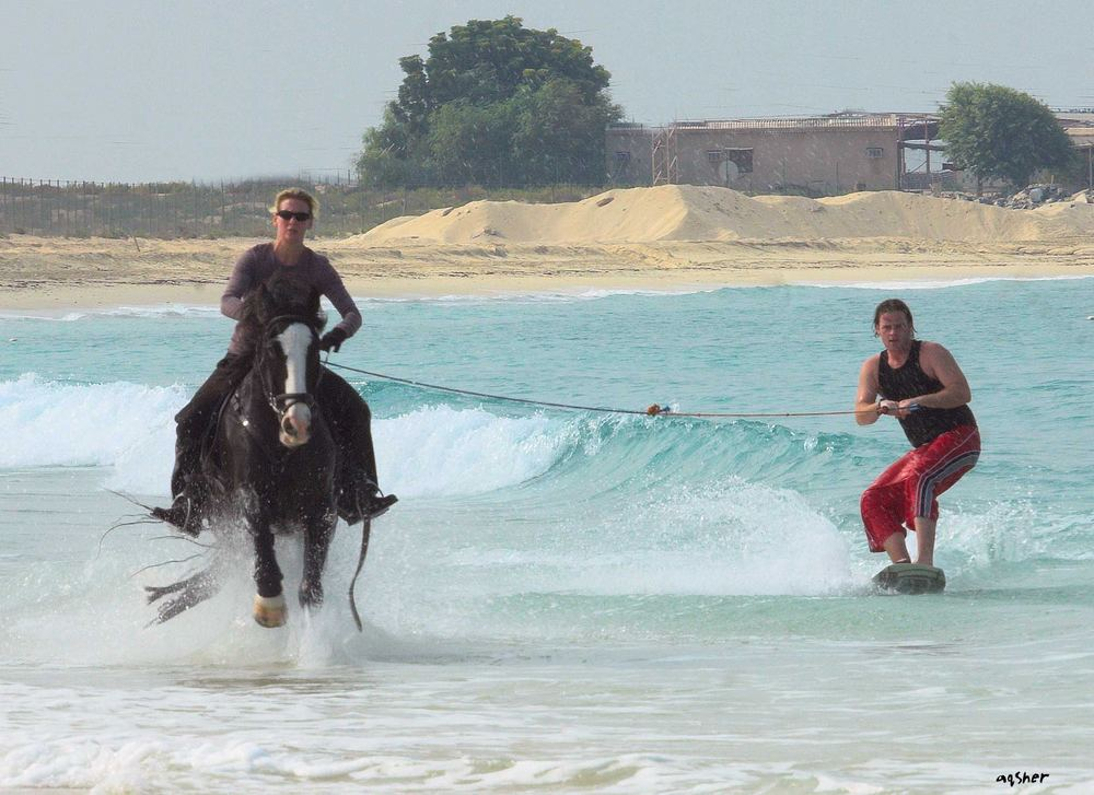 horse surfing in Dubai